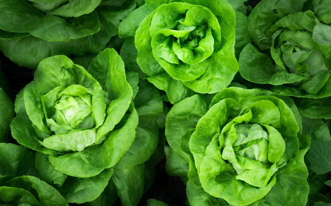 recette de la salade césar