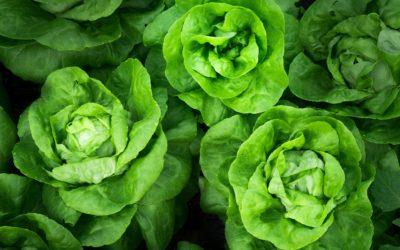 Comment cuisiner la recette de la salade césar?